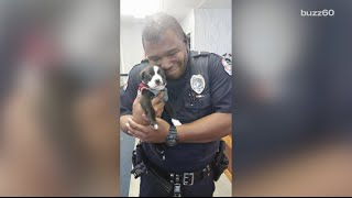Police officer responds to call, ends up adopting adorable puppy