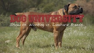 LANDRACE SHOW AND WORKING DOG BREEDS