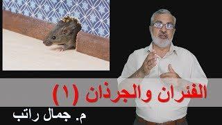 الفئران والجرذان (1)
