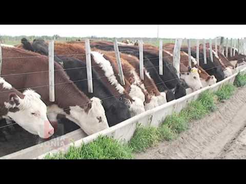 Nutrición animal engorde a corral