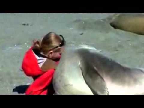 Elefante marino y mujer