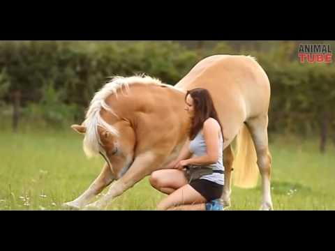 A Girl and A Horse
