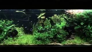 Aquarium Time Lapse