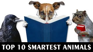 Top 10 Smartest Animals In The World Vlog#22 by HooplakidzLab