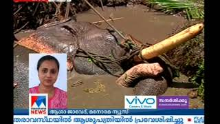 Elephant runs amok and falls into swamp at Thuravoor in Alappuzha   Manorama News