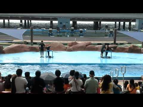 Xxx Mp4 Ocean Park Seal Show 3gp Sex