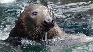 ​Wild Inside the National Zoo: Sea Mammal Smarts