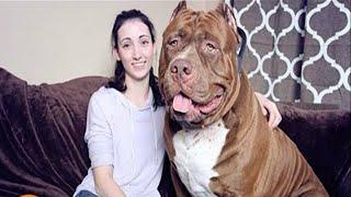 أضخم الحيوانات الأليفة في العالم | الرابع سوف يذهلك حجمة العملاق !