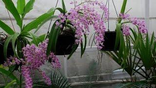 Những loại hoa lan có hương thơm nhất