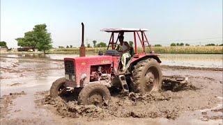 Belarus 510 in Mud with cultivator   Power of Belarus 🚜
