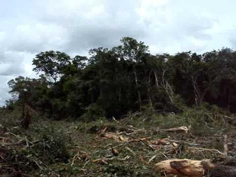 DESMATAMENTO o melhor video de desmatamento do youtube