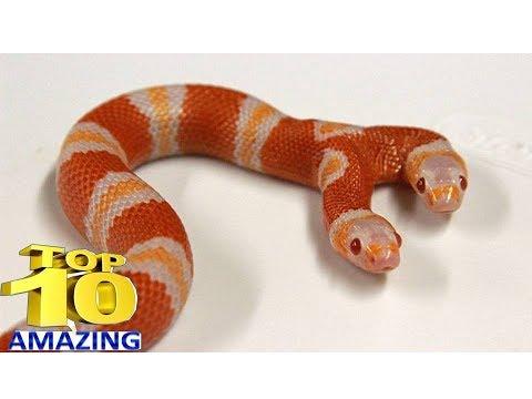 Xxx Mp4 दुनिया के 5 ऐसे पालतू जानवर की आपको विश्वास नहीं होगा Top 10 Worlds Strange Pets 3gp Sex