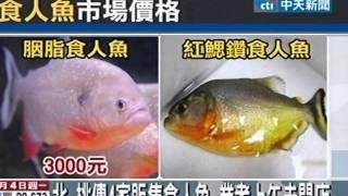 水族店亂賣兇猛食人魚?佯稱虎魚販售