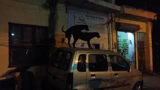 Порно на машине в Индии