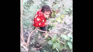 Jogda khedi fany boy