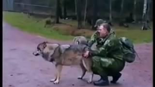 Kadın kurt'u Dövüyor.. (köpek kadın dövüşü) :))