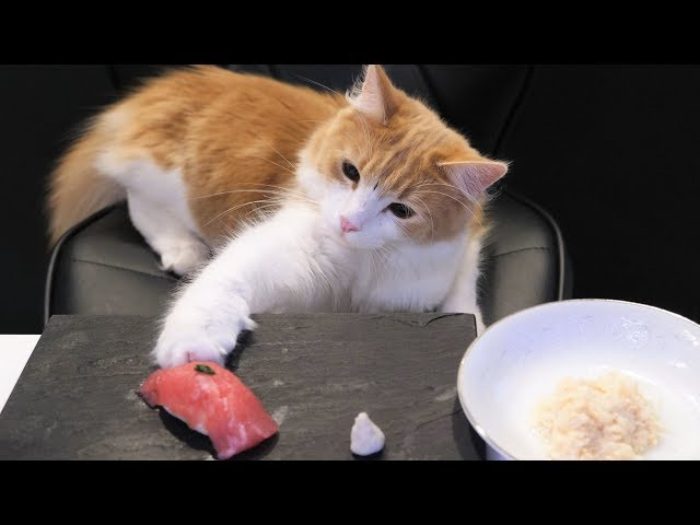 Sushi für Katzen