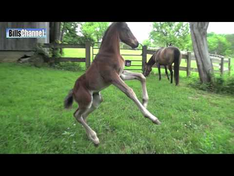 FUNNY BABY HORSE
