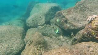 Snorkeling at Koloa Landing on Kauai Hawaii