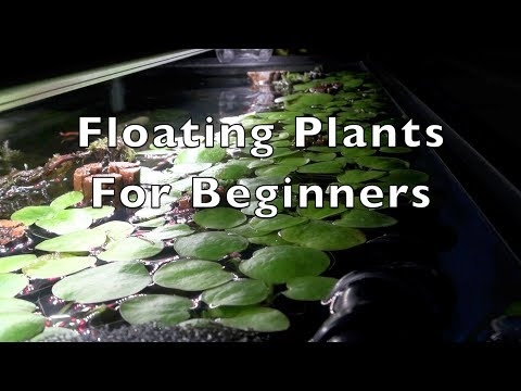 Xxx Mp4 Floating Plants For Beginners 3gp Sex