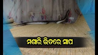 More Than Hundred Baby Cobras Rescued From A House In Bhadrak