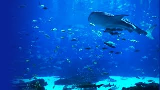6 HOUR Peaceful Aquarium - Ocean Voyager I screensaver video (HD video)