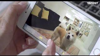 Cámara interactiva para perros y lanza golosinas remota - 15 POST
