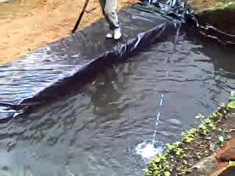 estanque de mojarra y cachama