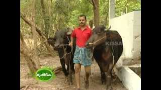 Success story of Dairy farming (buffalo and cow) by a Young entrepreneur