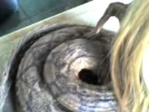 Human Birth a Baby with Snake Body and Old Human Face.3gp