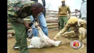 Six lions killed in Kenya capital's urban jungle