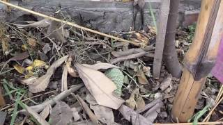 leaves compost | easy compost | homemade compost urdu/hindi