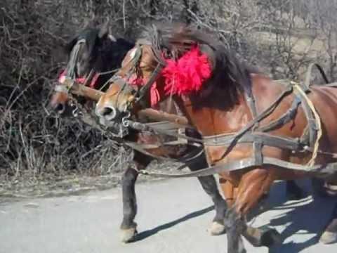 caii de tractiune a lui fan din valenii de munte