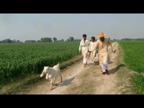 ZIDE MANHU PART 3 Sendhi Darma Full HD 2017 Hero NaveedNacheez