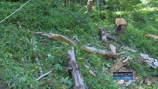 Man injured while trying to cut down dead tree