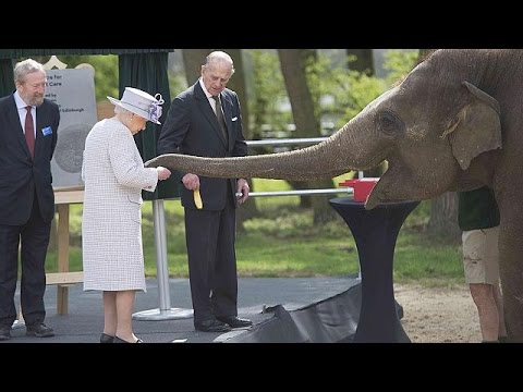 Xxx Mp4 Elephants Excited By Banana Toting Queen Elizabeth 3gp Sex