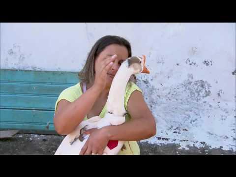 Achamos no Brasil Samukinha descobre um xerife do mundo animal