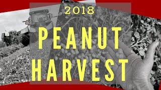 Lawrence County 2018 Peanut Harvest