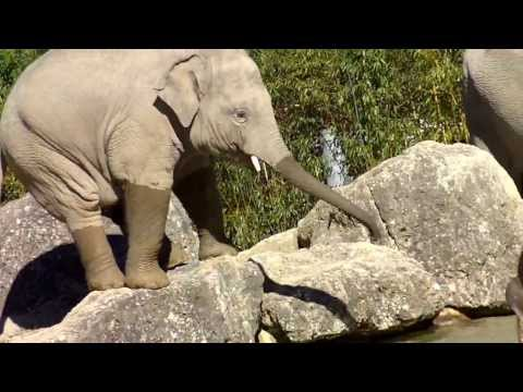 Xxx Mp4 Asian Elephants Taking A Bath Feeding Chinese Leopard 3gp Sex