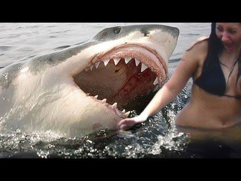 Xxx Mp4 SHARK ATTACKS Caught On Tape 3gp Sex