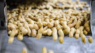 """Food Factories of Lebanon. """"Lebanese Nuts: How It"""