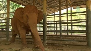 Emotional Blind Elephant Mourns The Death of Longtime Best Friend