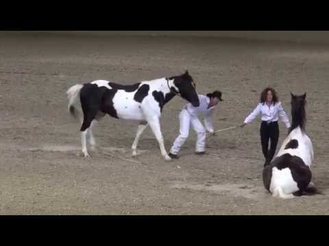 Tommie Turvey Liberty Horse Act Night of the Horse 2015 Del Mar National Horse Show