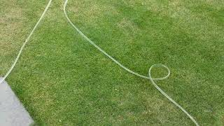 How To Save Yellow Grass From Dying