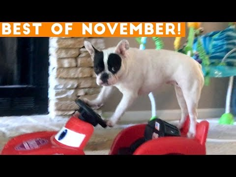 Ultimate Animal Reactions & Bloopers ofNovember 2018 Funny Pet Videos