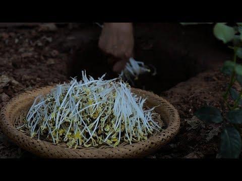 豆� )Long tender and fresh bean sprouts are nutritious and pollution free. Liziqi channel