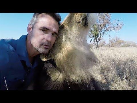 Bobcat s LOUD ROAR The Lion Whisperer
