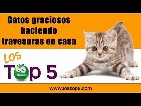 Gatos Graciosos Haciendo Travesuras En Casa LosTop5 ✓