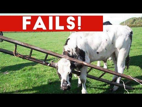 Funniest Animal Fails October 2016 Compilation Funny Pet Videos