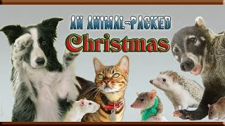 An Animal-Packed Christmas!  Amazing Animal Tricks